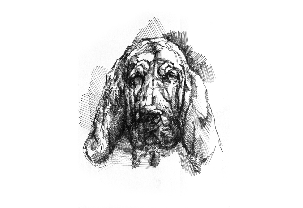 hund_face